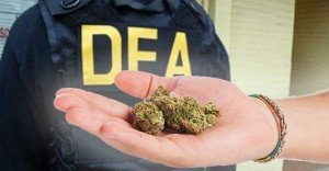 "DEA Say's ""NO"" To Marijuana"